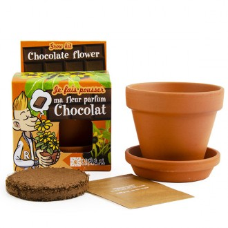 Kit de cultivo planta de chocolate
